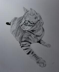 Dessin de chat Artiste animalier Portrait d'animaux sur commande