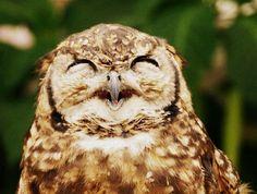 Pet Owl <3 Likee Harry Potter!!