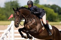 jumping horse - Google Search