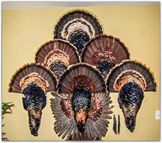 How to Skin, Prepare, and Display a Turkey Cape Mount - GRAND SLAM NETWORK