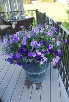 like all the purples...petunias, trailing verbena...very nice...