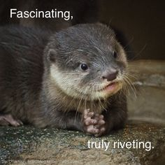 cute little otter... hehehe