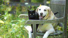 Many people consider their pet a full-fledged member of the family, providing it with the same level of care and love as they would a child. As people increasingly favor healthy food options, it's only natural that this same philosophy is being extended to their pets in the form of premium pet food.