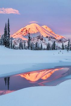 Winter scenery, Mount Rainier National park, Washington USA