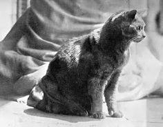 In 1989, Tommy the cat and Peggy the pug survived the explosion of the U.S.S. Maine. Tom was sleeping three decks below the upper deck when the explosion occurred -- he was fired through the three steel decks!