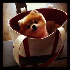 Puppy in a bag! Digital managing editor Kat Thomsen's pup, Lady