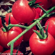 Tomato or Tomarto?