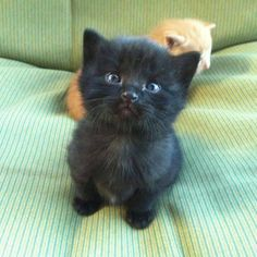 How cute is this little thing!!!!!!!!!!!