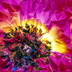 Anemone Abstracted In Fuchsia Digital Art