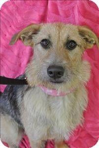 Terrier (Unknown Type, Medium)/Hound (Unknown Type) Mix Dog for adoption in Burlington, Kentucky - Tilly Mint