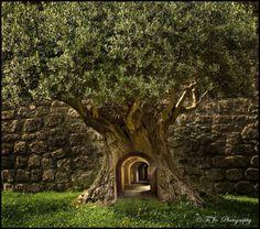 Mystery Tree, SwedenI wanna be like Alice in Wonderland someday