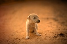 Cuteness by Gajendra Kumar on 500px