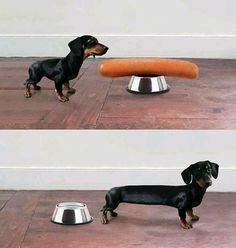 Funny Cartoons And Memes Cute Funny Animals, Funny Animal Pictures, Funny Images, Lol Memes, Dachshund Funny, Funny Dogs, Fun Funny, Dachshunds, Weenie Dogs