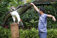 Save the Philippine Eagle! Support the Philippine Eagle Foundation! Exotic Birds, Exotic Pets, Our National Bird, Philippine Eagle, Eagle Pictures, Water Animals, Small Animals, Tiger Face, Extinct Animals