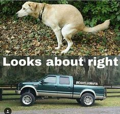 Hope you love our collection of Ford Meme Ford Memes Funny Ford Memes Funniest Ford Memes Hilarious Ford Memes Amusing Ford Memes Laughable Ford Meme Ford Memes, Ford Humor, Chevy Memes, Ford Quotes, Truck Quotes, Truck Memes, Funny Car Memes, Funny Puns, Hilarious