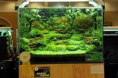 Amazing Aquascape Freshwater Gallery Ideas 13