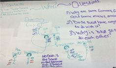 6 steps to planning a storyline using phenomena for NGSS