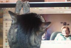 My furry employee, Sparky, working hard again, this time via Skype. He loves Skype.