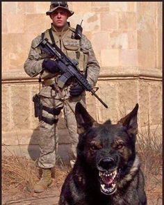 German Shepherd and soldier Military Working Dogs, Military Dogs, Police Dogs, Berger Malinois, Dog Soldiers, War Dogs, German Shepherd Dogs, German Shepherds, Pit Bulls
