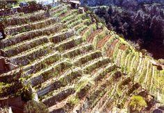 """Armacìa – il vino dei terrazzamenti di Angelo Sofo Emblema delle produzioni tipiche della Costa Viola (Calabria) e frutto di quella """"viticoltura eroica dei terrazzamenti"""" vince per la sua categoria la medaglia d'oro al XXI Concorso enologico internazionale dei vini di montagna e delle piccole isole organizzato dal CERVIM, il """"Centro di ricerche, studi e valorizzazione dei vini di montagna e di forte pendenza"""" con sede ad Aosta"""