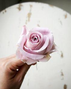 Sugar flowers course at Shenzhen, China ~Sugar rose 🌷#sugarflowers #sugarcraft #sugarartist #sugarart #sugarflowerclass #sugarcraftclass #roses #sugarrose #handcraft #handmade #decoration #wendysugarcraft #hongkong