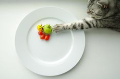 "500px / Photo ""tomato"" by Alexandr M"