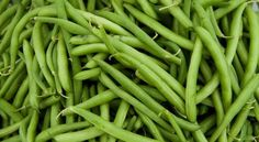 Share your favorite recipes using green beans for our June 2 Recipe Box. (Please skip the green bean casserole with the French fried onions and condensed soup). Growing Green Beans, Growing Greens, String Bean Recipes, Beans Recipes, Fruits And Vegetables, Veggies, Greenbean Casserole Recipe, Casserole Recipes, Fit Bodies