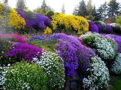 5 Mixed Trailing Alpine Mini Plug Plants Rockery Perennial | eBay