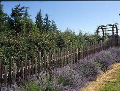 Robert Kourik's Garden Roots: Deer Fencing With a View, building one.