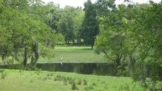Spring has sprung at Equestrian Springs