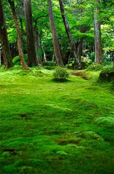 翠苔 −苔寺にて−-gooブログ