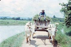 Thai worker