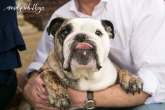 The Vreeland Family {Nashville Dog & Family Photographer} — Nashville Dog Photographer English Bulldog Puppies, French Bulldog, English Bulldogs, Boston Terrier Pug, Bulldogs Ingles, Cute Dogs And Puppies, Doggies, Bassett Hound, Animal Photography
