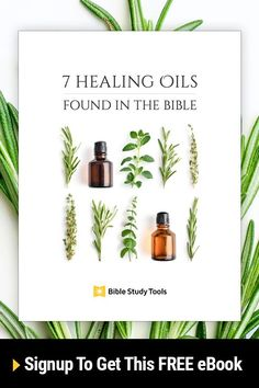 Find out how to use the seven most popular (and useful) healing oils in the Bible. Get your free guide today! Essential Oils Guide, Essential Oil Uses, Young Living Essential Oils, Healing Oils, Healing Herbs, Essential Oil Diffuser Blends, Living Oils, Perfume, Doterra Essential Oils