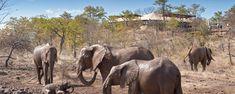 Elephant Camp - Vic Falls Travel and Tours Zimbabwe Elephant Camp, Glass French Doors, Canvas Tent, Victoria Falls, Plunge Pool, Luxury Camping, Zimbabwe, Wilderness, Woodland
