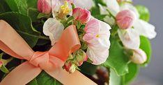como fazer laço de fita passo a passo Rose, Flowers, Plants, Diy, Ribbon Bows, Ribbons, Simple, Step By Step, Creativity