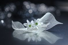 Sailing of Love by Lafugue Logos - Photo 174292053 / 500px