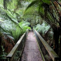 Melba Gully Great Ocean road by Vic Australia, Victoria Australia, Australia Travel, Rainforest Trees, See It, West Coast, Railroad Tracks, Melbourne, Destinations