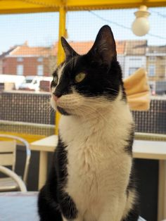 Did you know that in Ghent, Belgium, there's a cat shelter on a boat? You can cuddle the cats the entire afternoon and have a drink in their company? Find out all about it at http://www.traveling-cats.com/2015/04/cats-from-ghent-belgium.html