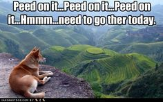 funny dog pictures - Peed on it...Peed on it...Peed on it...Hmmm...need to go ther today.