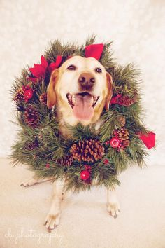 yellow lab Merry Happy Christmas Day Card Puppy Holiday Dogs Santa Claus Dog Puppies Xmas #MerryChristmas Labrador Retriever Labs