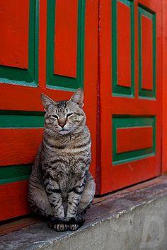 cat red door