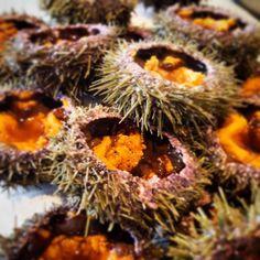#seaurchin#uni#rimouski#montreal#quebec#chefofinstagram#chefoninstagram#theartofplating#gastronomy#gastroart#foodie#mtlfoodie#foodiemtl#mtlfood#foodphotography#foodpics#truecook#truecooks#cooking#foodstyling#food#foodporn#chef#sharefood#mtlmoments by jp_desjardins