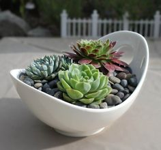 Succulent Arrangement in Contemporary White Porcelain Bowl
