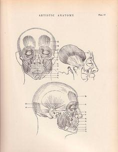 Vintage Print Human Anatomy Illustration 1941 Wall Art by AgedPage, $11.00 #agedpage