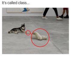 Funny Pet Memes – 16 Pics