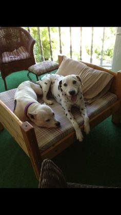reunited CT Lost Pets 10 hrs near Southbury, CT ·    Lost dogs in Southbury. Please contact me I've you've seen them.