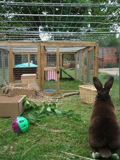 Admiring the nice long rabbit run! Photo from Warren Bunny Boarding