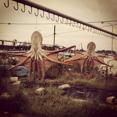 明石といえば、ですね。#明石 #兵庫 #タコ #akashi #hyogo #octopus - @uchuhunter55- #webstagram