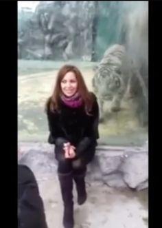 Esta chica rusa molestaba al tigre blanco. Mira lo que pasa entenderás por qué muchos la odian